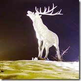 Mythical White Stag